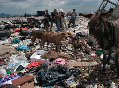 dump dogs 1