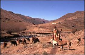 village dogs2