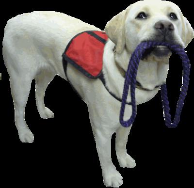 Assistance-Dog