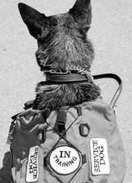 servicedogintraining