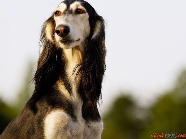 chepkadog.com-153